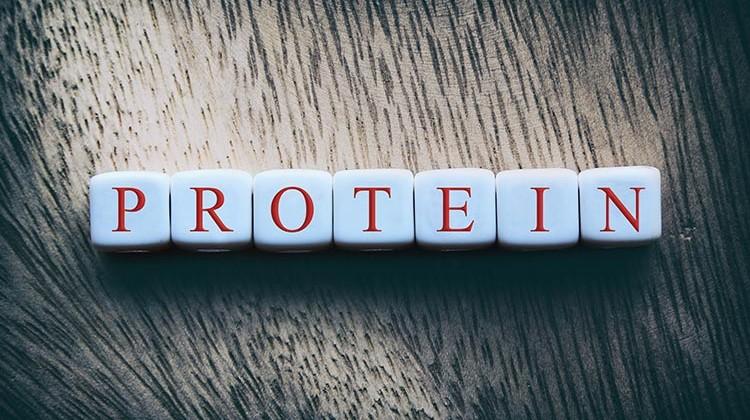 Il dibattito sulle proteine
